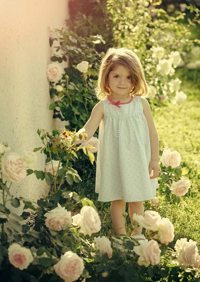 Girl kid with cute smile standing at blossoming rose flowers royalty free stock photography