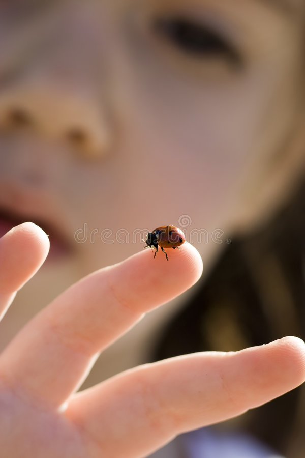 Download Girl and ladybug stock photo. Image of beetling, face - 3881492