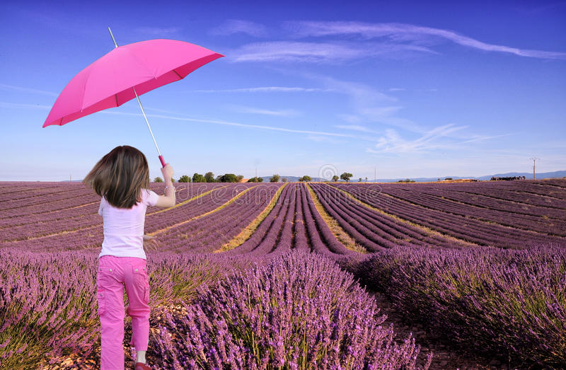 Girl in lavender field. Lavender field in Valensole, Provence, France. Girl in pink clothes and pink parasol running into the field stock image