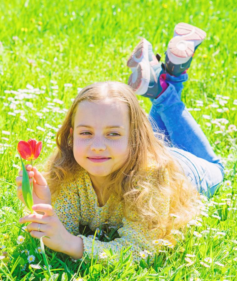 Girl with long hair lying on grassplot, grass background. Spring mood concept. Girl on smiling face holds red tulip. Flower. Child enjoy spring sunny weather stock image