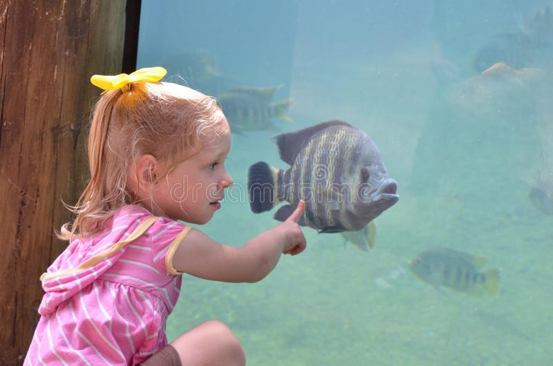 Girl looking at fish royalty free stock photo