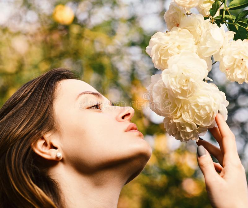 Girl looks at flowers on nature background, defocused. Nature and blossom concept. Woman with romantic face. Sniffs white or ivory roses. Tender scent and royalty free stock photos