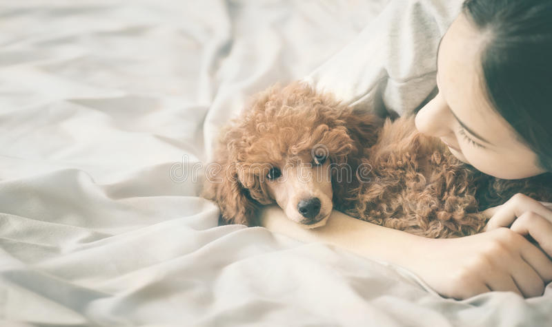 Girl is lying and sleeping with poodle dog in bed. Young woman is lying and sleeping with poodle dog in bed royalty free stock image