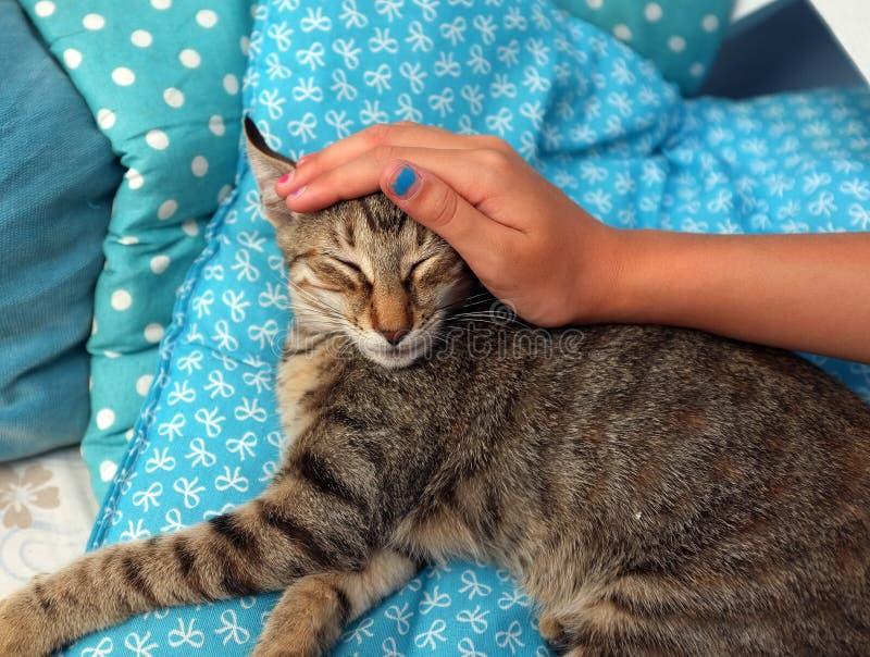 Girl& x27; a mão de s é trocas de carícias um o gato fotos de stock