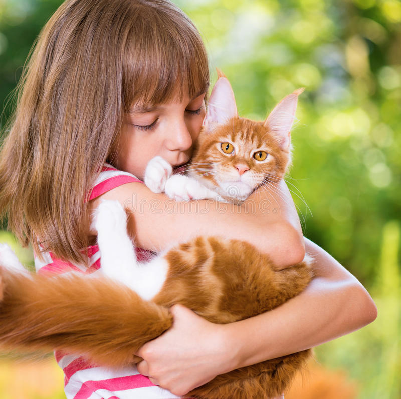 Girl with Maine Coon. Beautiful little girl holding cute red Maine Coon kitten royalty free stock photo