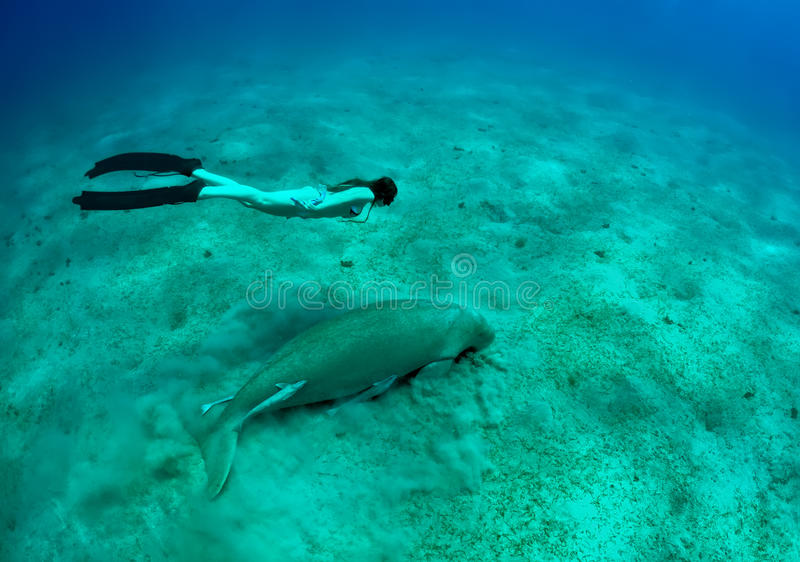 Girl and manatee. Free diving girl and manatee in deep sea. two mermaid stock images