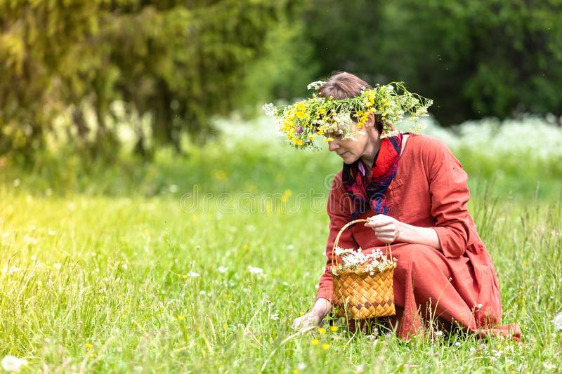 A girl in a national costume and a wreath on her head collects berries in a basket, on a green lawn in.  royalty free stock images