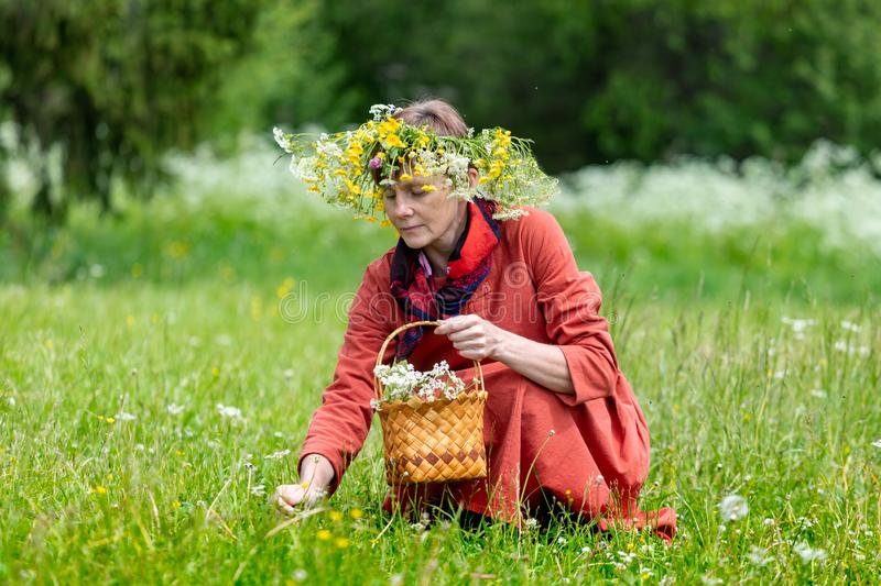 A girl in a national costume and a wreath on her head collects berries in a basket, on a green lawn in.  stock image