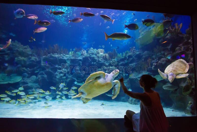 Girl observing fish at aquarium. Girl observing fish at the aquarium royalty free stock image