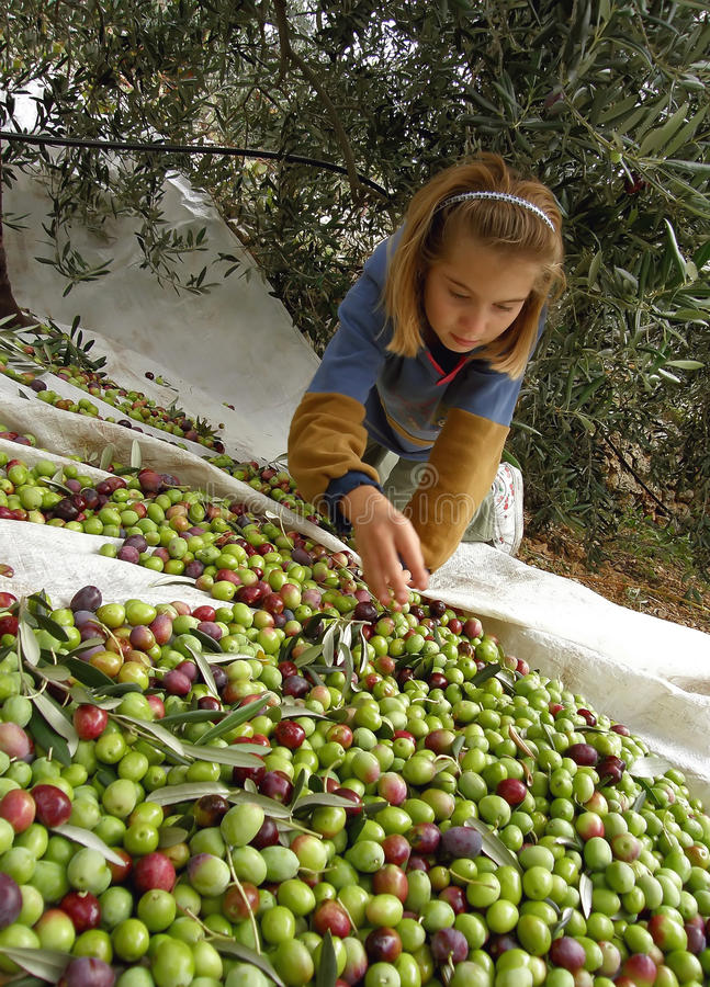 Girl and olives stock photography