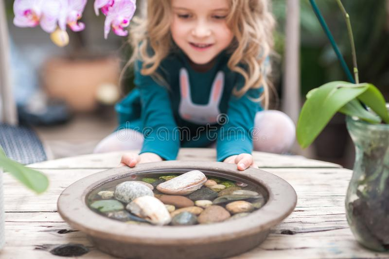 The girl in the orchid greenhouse is played with flowers and stones. Girl with blooming orchids holds stones royalty free stock images
