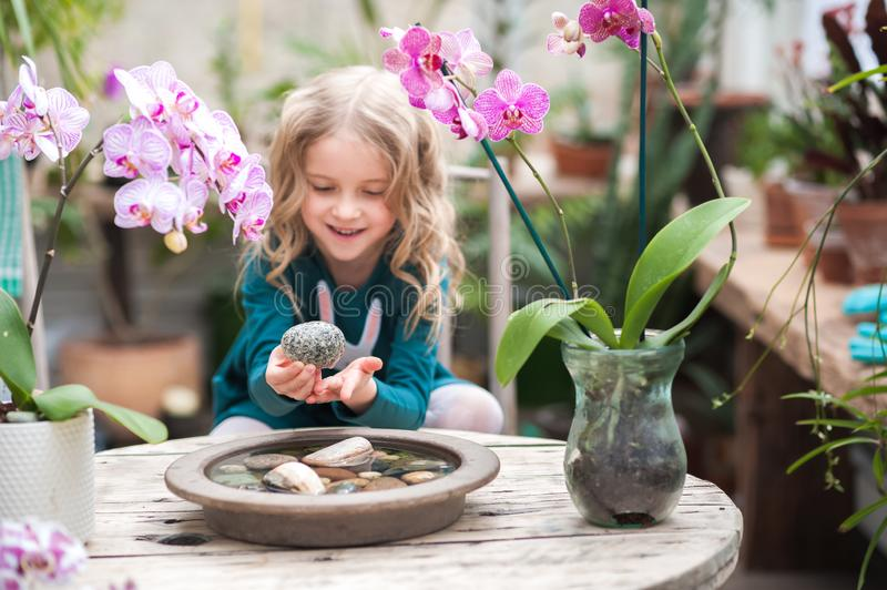 The girl in the orchid greenhouse is played with flowers and stones. Girl with blooming orchids holds stones. The girl in the orchid greenhouse is played with stock images