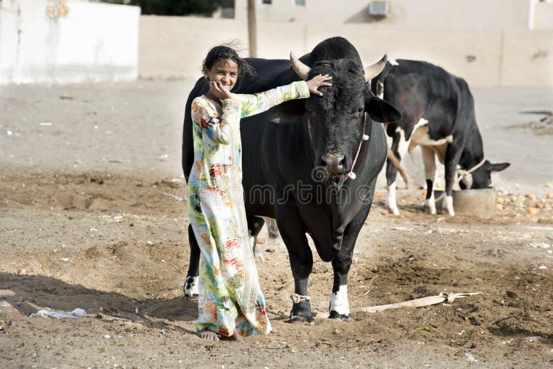 Girl and Ox stock photos