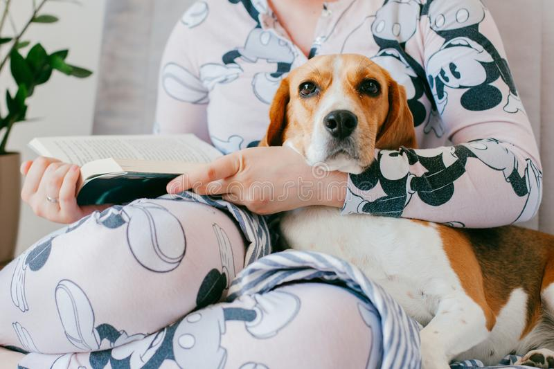The girl in pajamas is reading a book at home with a beagle puppy dog. Beagle is lies on girl`s knees. stock photo