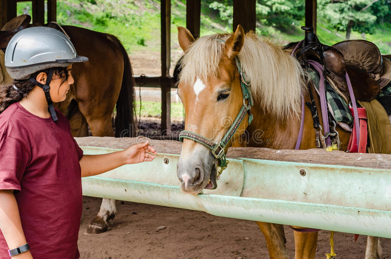 Girl Petting Horse stock photography