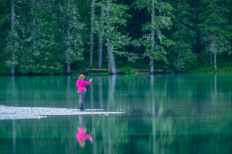 Girl Photographer on the Forest Lake stock images