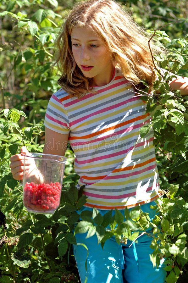 Girl picking berries. Nikon D70, lifestyle image of child in nature royalty free stock photography