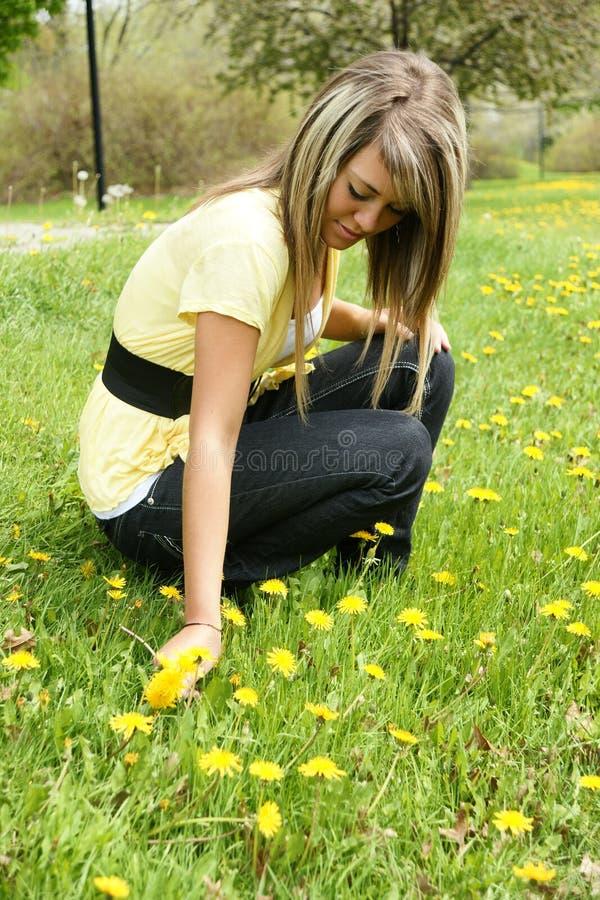 Girl picking dandelion stock images