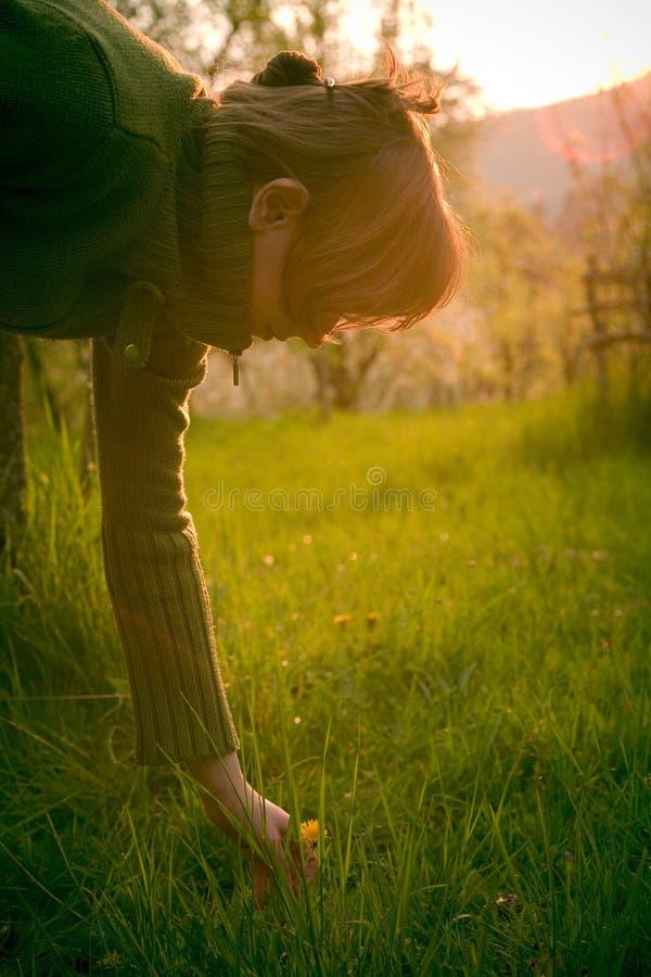 Download Girl Picking Dandelion stock image. Image of grassy, sunset - 2392931