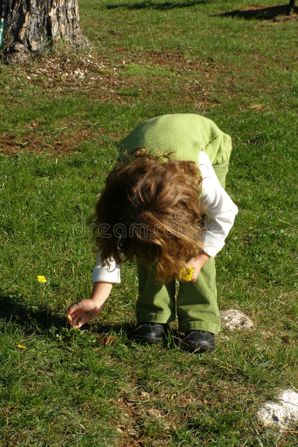 Download Girl picking flowers stock image. Image of green, grass - 3575005