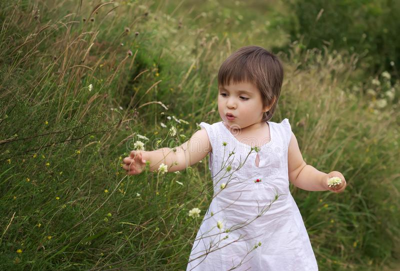 Girl picking flowers on the hill in the summer royalty free stock photography