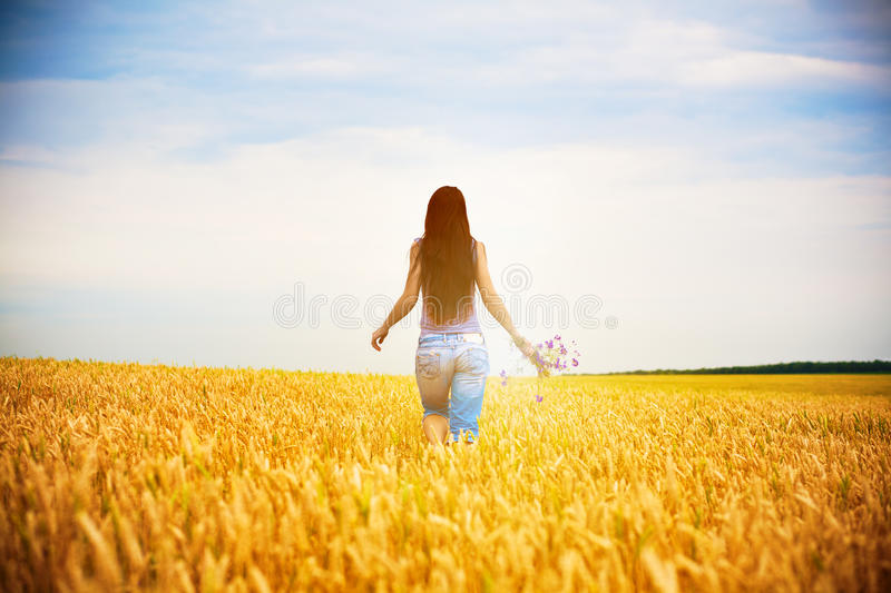 Girl is picking flowers on the yellow field stock image