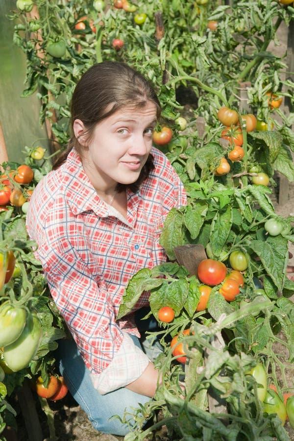 Download Girl Picking  Tomato Stock Photos - Image: 12537413