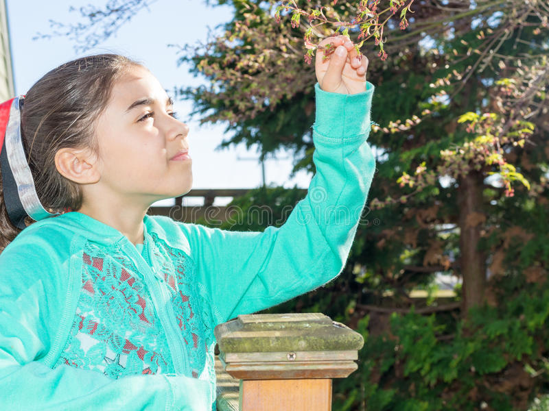 Girl Picks Leafs From Tree royalty free stock photography