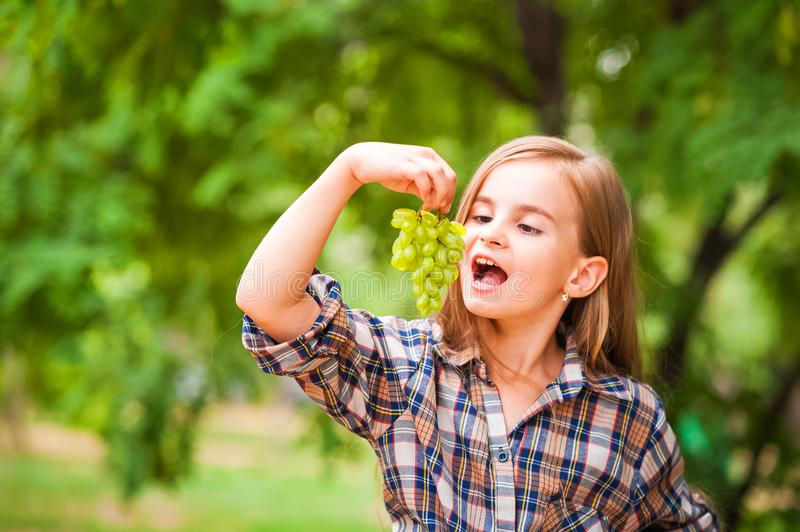 Girl in a plaid shirt and jeans holding a bunch of green grapes close-up. Concept of harvesting a plantation of grapes and a girl. Copy space stock photo
