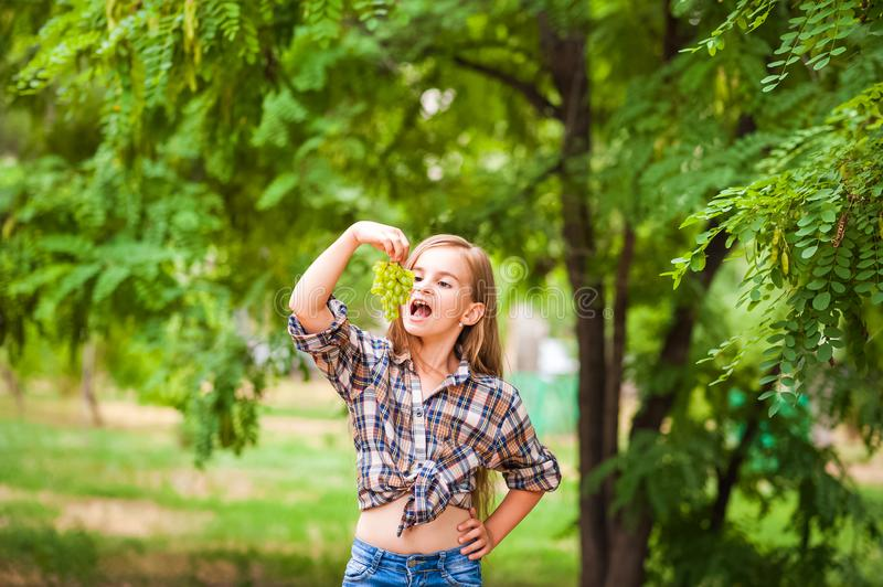 Girl in a plaid shirt and jeans holding a bunch of green grapes close-up. Concept of harvesting a plantation of grapes and a girl. Copy space stock images