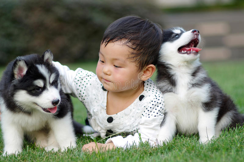 Girl play with puppy. A chinese girl play with two puppies