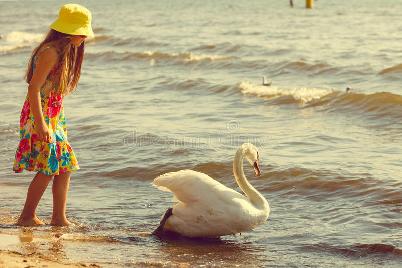 Girl playing with adult swan. stock photos