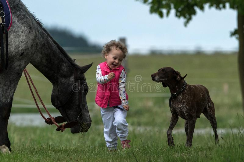 Girl playing with dog and horse, young pretty cute girl with blond curly hair, freedom, joyful, outdoor, spring, healthy, happy ha stock images