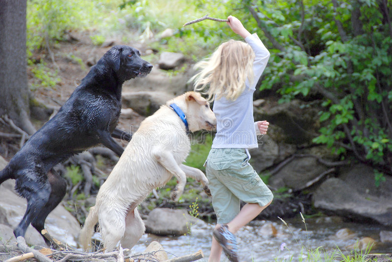 Girl playing with dogs. A young girl is playing with two dogs. Playing fetch and throwing a stick in the water