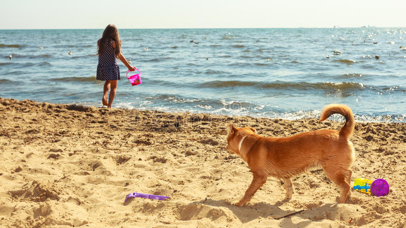 Girl playing with her dog. Connection between animals and kids concept. Sportive mixed race dog and girl kid playing together. Active child with puppy having royalty free stock images