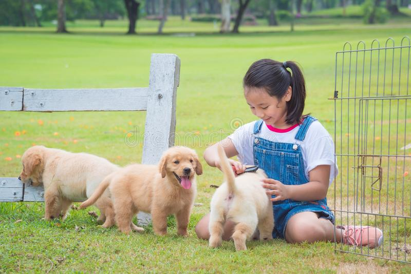 Girl playing with little golden retriever dog in par. Young asian girl playing with little golden retriever dog in par royalty free stock photos