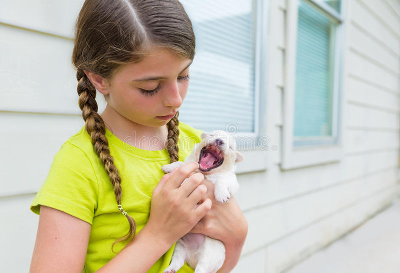 Girl playing with puppy chihuahua pet dog. Outdoor stock photo