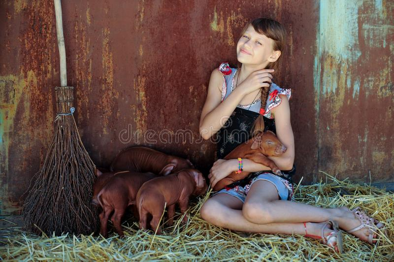 The girl is playing with red newborn pigs of the Duroc breed. The concept of caring and caring for animals.  stock image