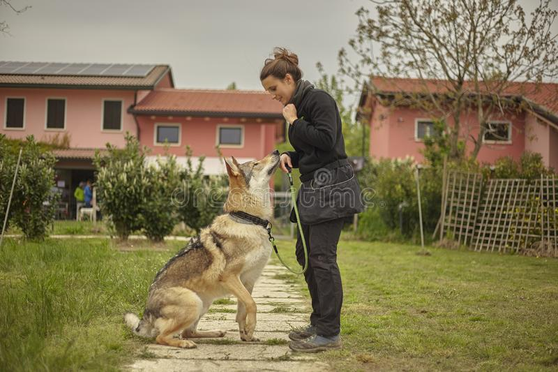 Girl plays with a wolf dog #2 royalty free stock photography