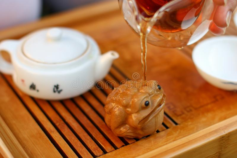 Girl pouring boiling water on a statue of a toad. Tea ceremony process royalty free stock images