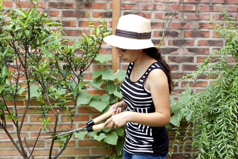Girl with pruning shears. Trimming a tree royalty free stock images