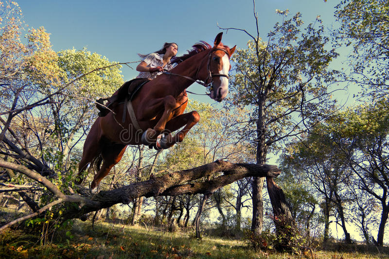 Girl with purebred horse. Image of Beautiful girl with purebred horse, jumping a hurdle in forest stock images