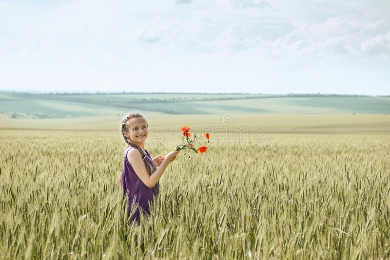 Girl with red tulip flowers posing in the wheat field, bright sun, beautiful summer landscape royalty free stock images
