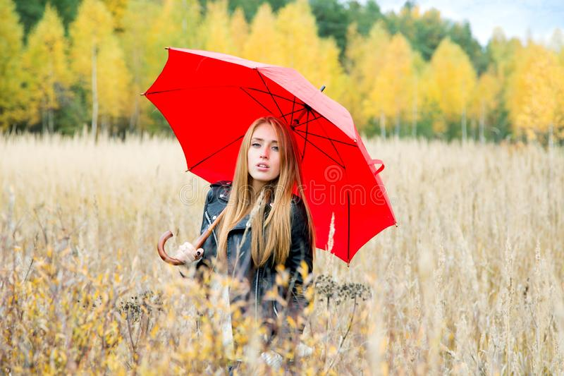 Girl with a red umbrella in the field on an autumn afternoon on a background. Of forest with yellow leaves stock images
