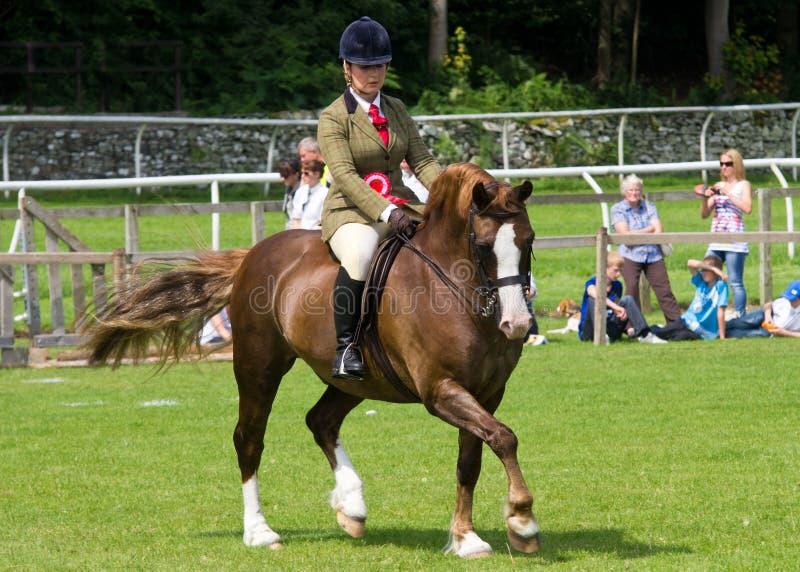 Girl riding horse at Cartmel Show 2011 stock image