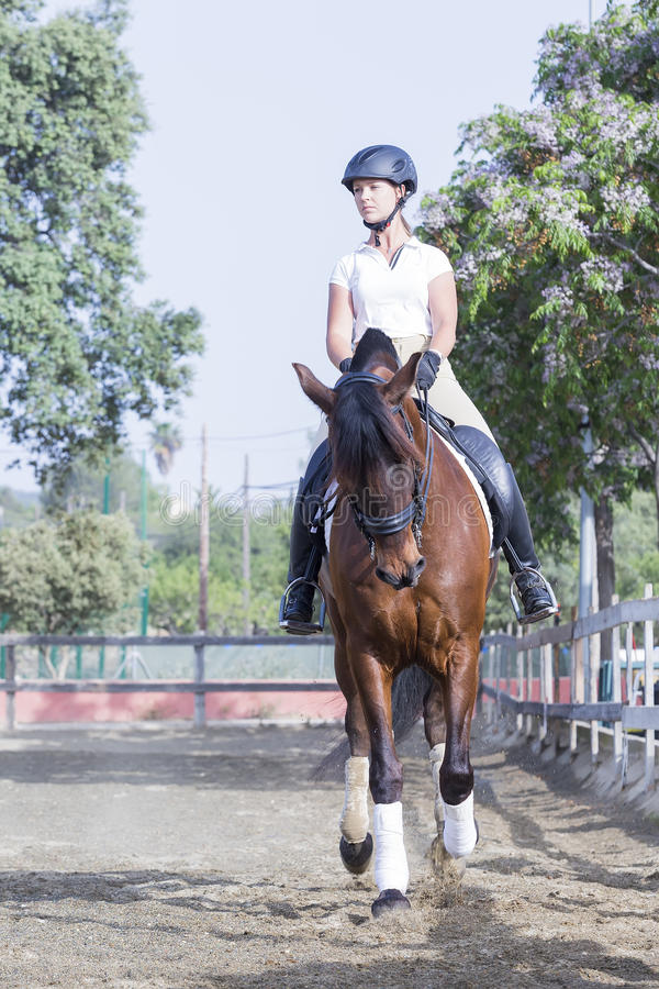 Girl riding a horse. Young woman is riding a horse ready to jump at the byre - focus on the neck royalty free stock image