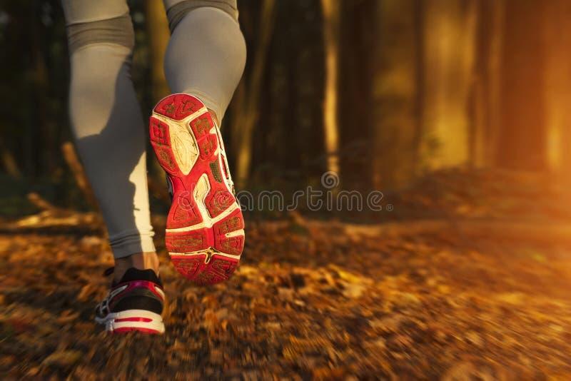 Girl running at sunset. Fitness Girl running at sunset in forest stock illustration