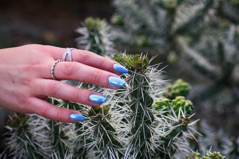 Girl`s hand touching cactus royalty free stock image