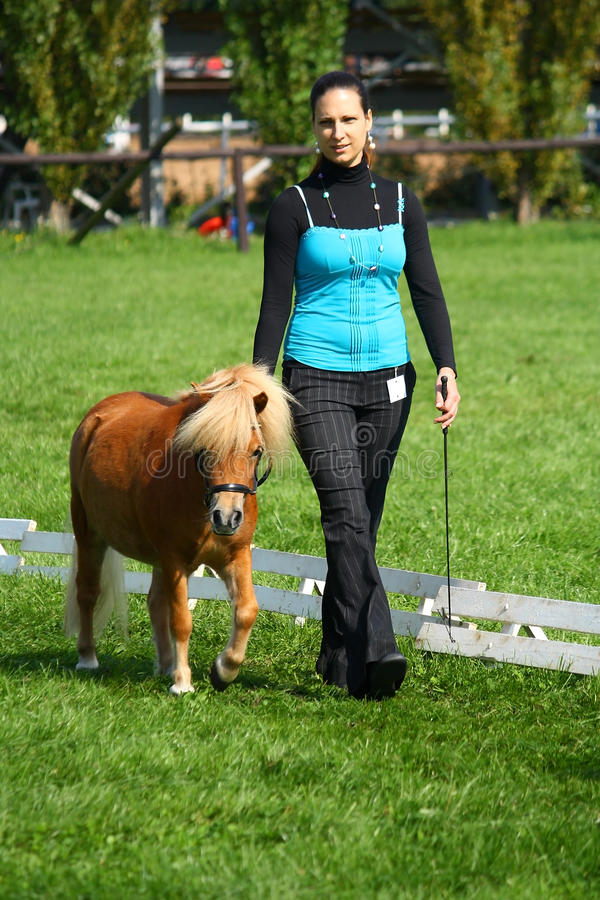 Girl Showing A Mini Pony Stock Photography
