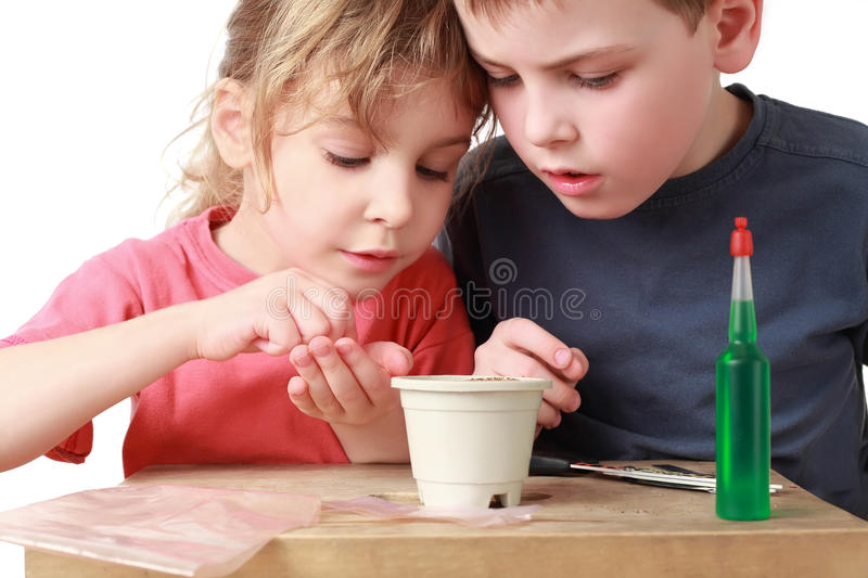 Download Girl Shows Brother How To Sow Grains In Pot Stock Photo - Image of fascination, childhood: 18848834